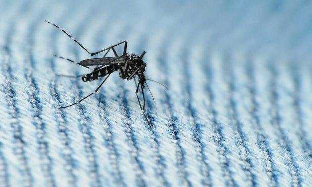 Zika virus threatens Puerto Rican economy