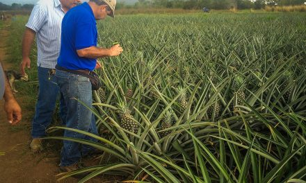 Local entrepreneurs push for agricultural self-sufficiency in Puerto Rico after Hurricane Maria